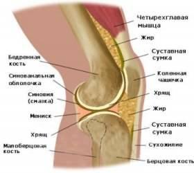 Строение колена