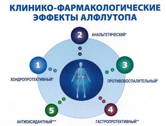 Препараты-хондропротекторы алфлутоп