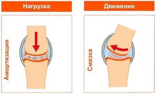 Работа естественной смазки коленного сустава при движении