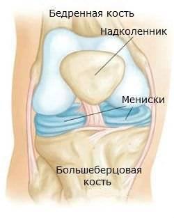 Устройство коленного сустава включает в себя мениски-амортизаторы