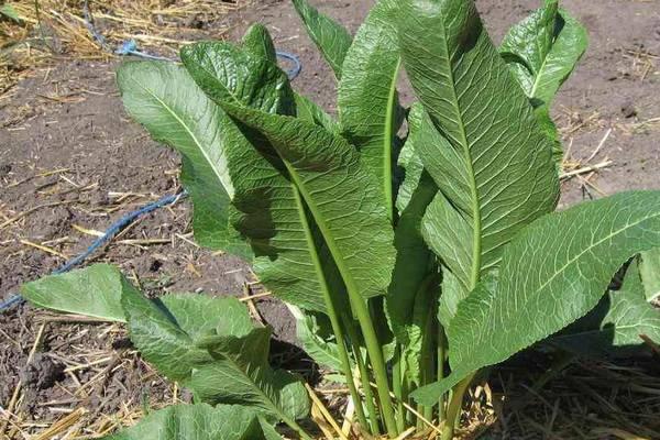 Травы при артрите и артрозе — Суставы