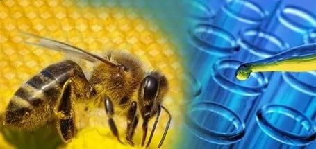 Мазь с пчелиным ядом для суставов