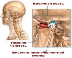 Анатомия ВНЧС сустава