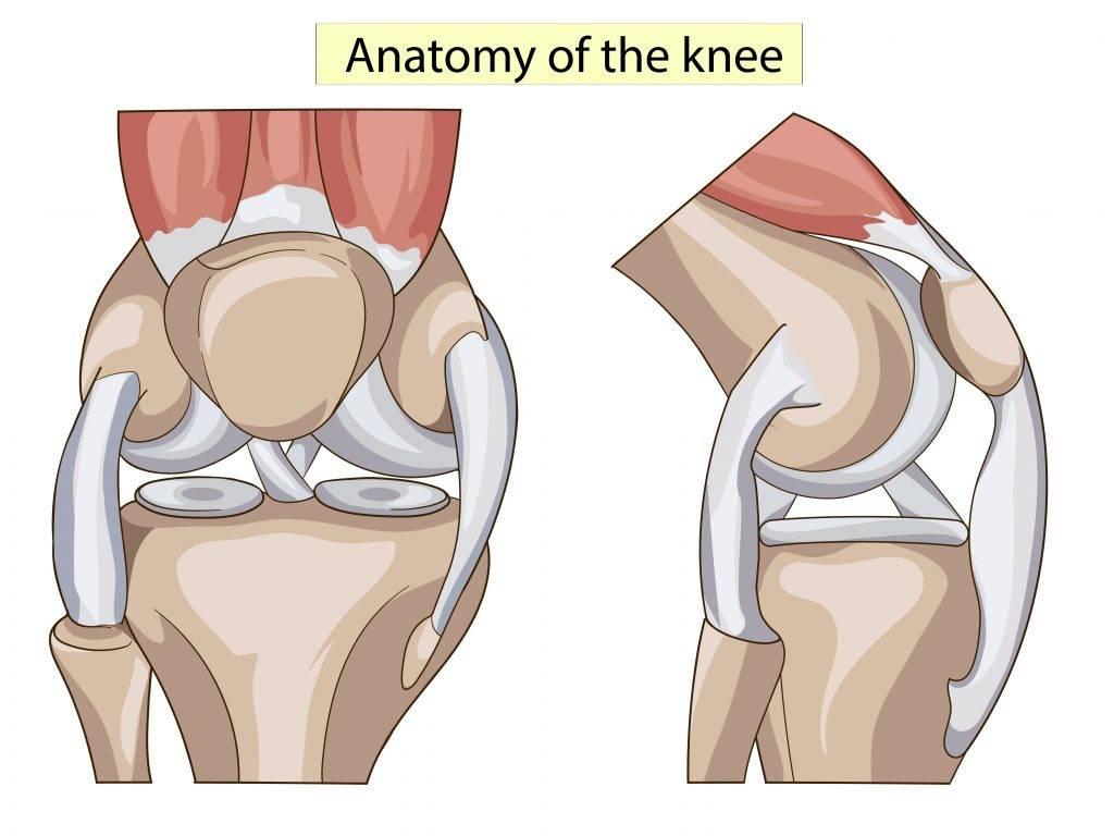 Дегенеративные изменения менисков коленного сустава, причины дистрофических изменений менисков