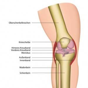 Боковые связки коленного сустава обеспечивают стабильность колена