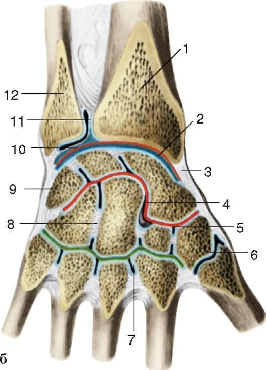 Изображение - Суставы кисти мышцы 5b6c16be982825b6c16be982c2