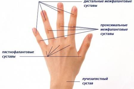 Изображение - Суставы кисти мышцы 5b6c16c0246d75b6c16c024723