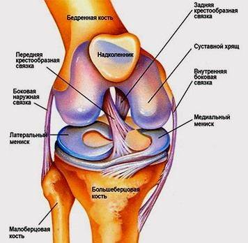 Damage to the meniscus of the knee joint